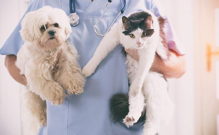 Δεν μεταδίδεται ο ιός απο τα κατοικίδια / Pets cannot spread COVID-19