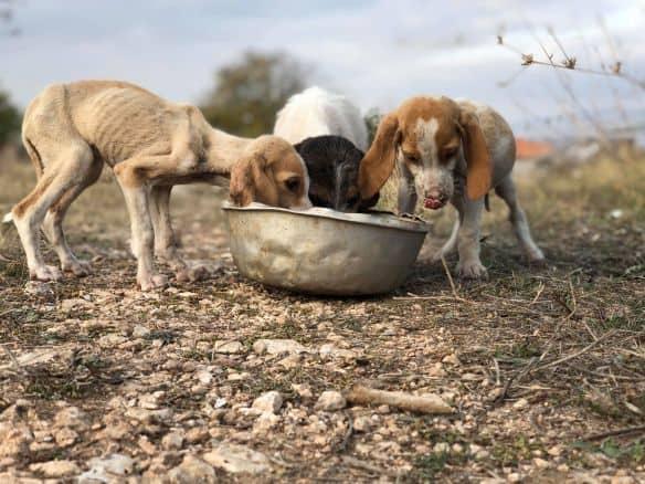 Δελτίο τύπου Π.Φ.Π.Ο.: Η μέχρι στιγμής αποτίμηση της κατάστασης σχετικά με τα ζώα και τον covid 19 – Ακατανόητες αποφάσεις εις βάρος χιλιάδων πολιτών και χιλιάδων ζώων υποχρεώνουν τους πολίτες να παρανομούν για να μην πεθάνουν τα πάσης φύσης ζώα τους