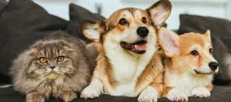 Ανοιχτή επιστολή – Συνοπτικά τι ισχύει για τα ζώα και τον κορωνοιό / Open Letter – Animals and Coronavirus
