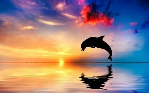 ΑΝΑΣΤΟΛΗ ΑΔΕΙΑΣ ΔΕΛΦΙΝΑΡΙΟΥ – ΤΑ ΔΕΛΦΙΝΙΑ ΑΝΗΚΟΥΝ ΣΤΙΣ ΘΑΛΑΣΣΕΣ / SUSPENSION OF THE DOLPH – DOLPHINS LIKE OCEANSINARIUM LICENSE –