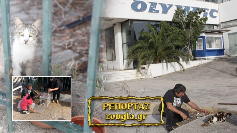 Αυτοψία του zougla.gr στο πρώην αεροδρόμιο Ελληνικού ενόψει των έργων,αγωνία για τα εκατοντάδες ζώα