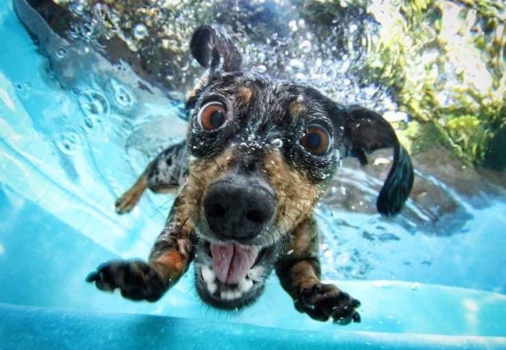 Δεκάλογος ορθής συμπεριφοράς για να έχετε τον σκύλο σας στην παραλία!