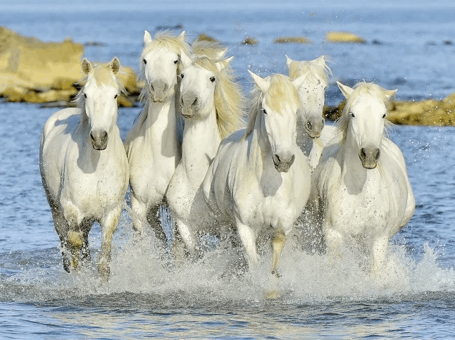 Μία ευχάριστη έκπληξη, η Ελλάδα καινοτομεί! Απαγόρευση σφαγής ιπποειδών στη χώρα μας! A pleasant surprise, Greece first in equine slaughter prohibition!