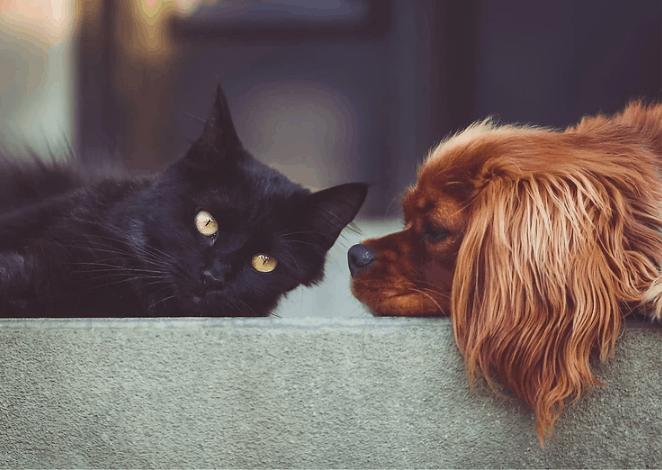 Μπορούν τελικά τα σκυλιά μας και οι γάτες μας να είναι Vegan?