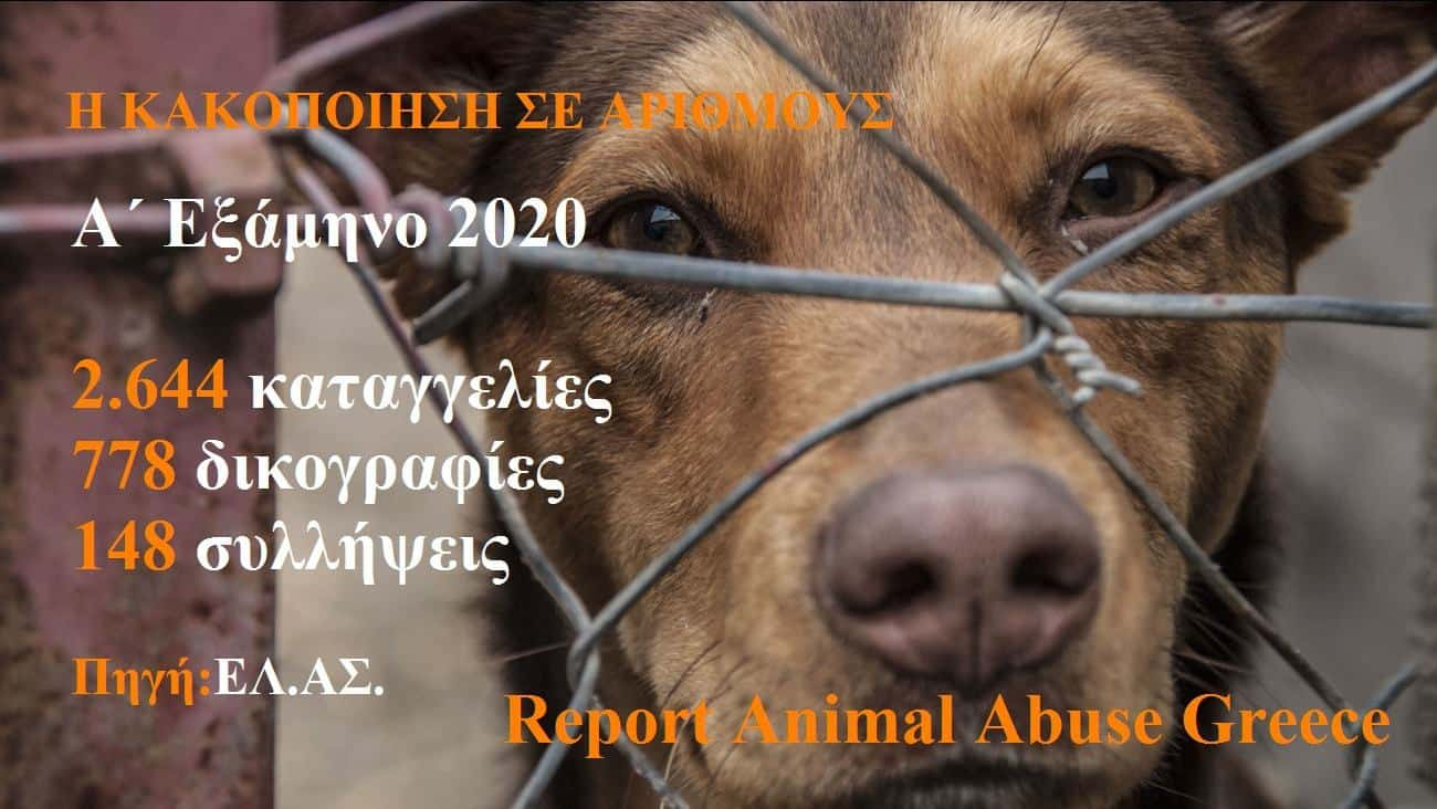 Στατιστικά Α΄ εξαμήνου 2020 για κακοποιήσεις ζώων, από τον Βαγγέλη Δρίβα, Αστυνομικού ,Κλινικού Ψυχολόγου (B.Sc., M.Sc.)