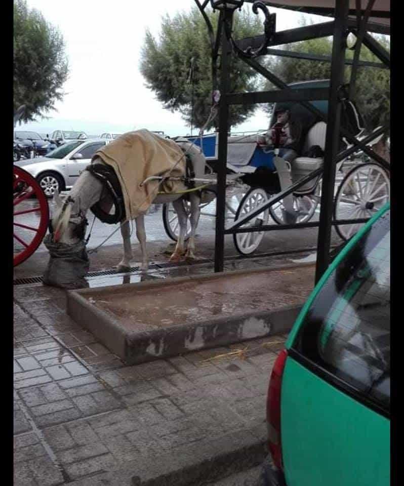 Επιστολή της ΠΦΠΟ στις αρμόδιες Αρχές για κακοποίηση ιπποειδών στην Αίγινα