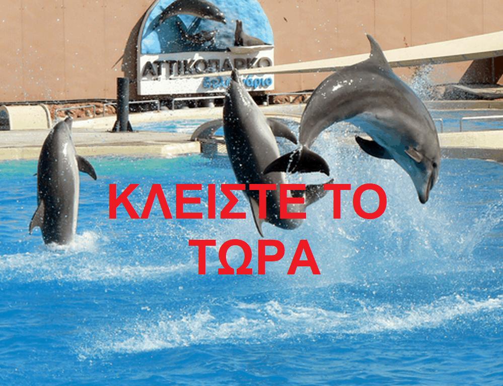 Ποινική δίκη στο μονομελές κατά του ιδιοκτήτη του δελφινάριου
