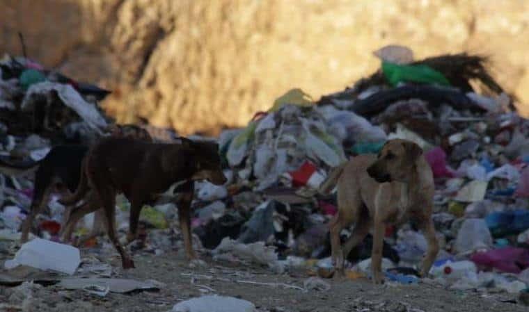 Ο Δήμαρχος Τοπείρου στο νομό Ξάνθης μεταφέρει τα αδέσποτα στη χωματερή , όπως και τα σκουπίδια.