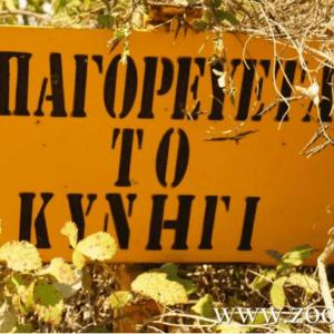 Λαθροθηρία στην Κύθνο µε ολέθρια αποτελέσµατα – Poaching in Kythnos with disastrous results