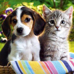 Δελτίο Τύπου: Μια πρώτη ανάγνωση του άξονα γύρω από τον οποίο φαίνεται να διαμορφώνεται το σχέδιο νόμου για τα ζώα συντροφιάς, όπως αυτός προκύπτει από τα σημερινά δημοσιεύματα του τύπου