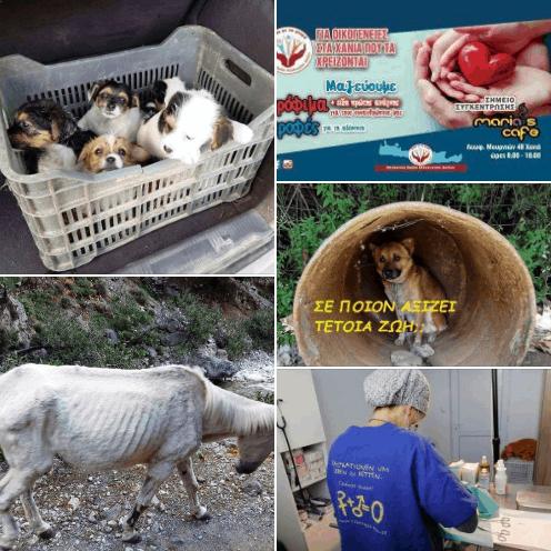 Απολογισμός της δράσης του Φ. Σ. Χανίων Η Προστασία των Ζώων: Όσα ζήσαμε το 2020