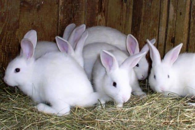Καταγγελία της ΠΦΠΟ στην Δίωξη Ηλεκτρονικού Εγκλήματος για παράνομο εμπόριο, παράνομη εκτροφή, αγγελία, κακοποίηση κουνελιών – PFPO reports illegal trade, illegal breeding, advertising, rabbit abuse to the Cybercrime Prosecution