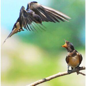 Κάλεσμα της ΠΦΠΟ σε εθελοντές να πλαισιώσουν την ομάδα της για την άγρια ζωή και την προστασία της