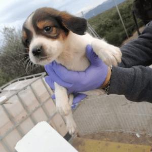 Επιστολή ΠΦΠΟ προς τον αρχηγό ΕΛ.ΑΣ. σχετικά με την δολοφονία δεσποζόμενου σκύλου με βέλος και τον αποκεφαλισμό αδέσποτου κουταβιού