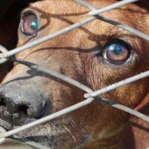 Επιστολή της Π.Φ.Π.Ο. σχετικά με την διαχείριση των αδέσποτων ζώων στο παράνομο κυνοκομείο Δήμου Άργους