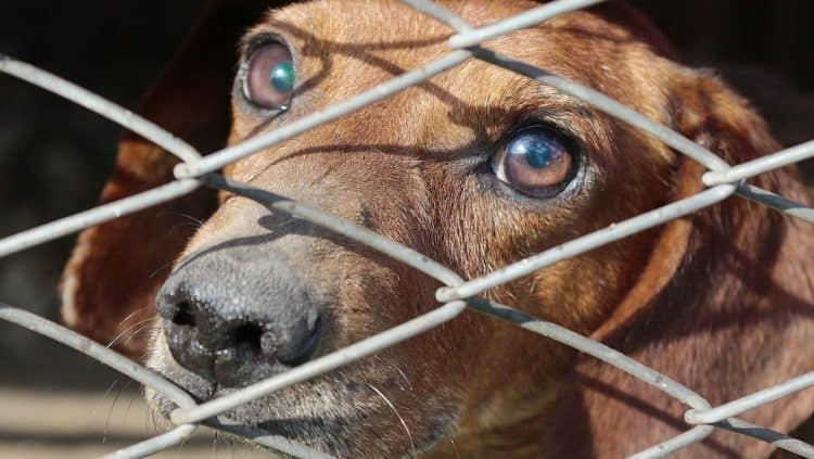 Καταγγελία για παράνομες περισυλλογές ,μετακινήσεις , εγκλεισμό αδέσποτων ζώων στο Δημοτικό σας κυνοκομείο/Έλεγχοι σε εθελοντικά καταφύγια