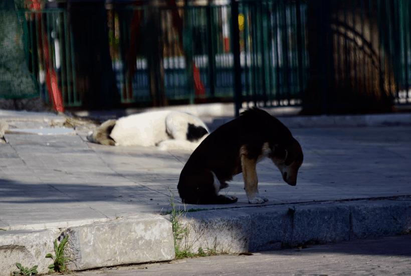 SOS για τα ζώα συντροφιάς: Γιατί αυξήθηκαν τα αδέσποτα και πώς τα προστατεύει το νέο νομοσχέδιο