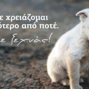 Δελτίο Τύπου: Η θέση της Π.Φ.Π.Ο. για το υπό Διαβούλευση Νομοσχέδιο για τα ζώα συντροφιάς.