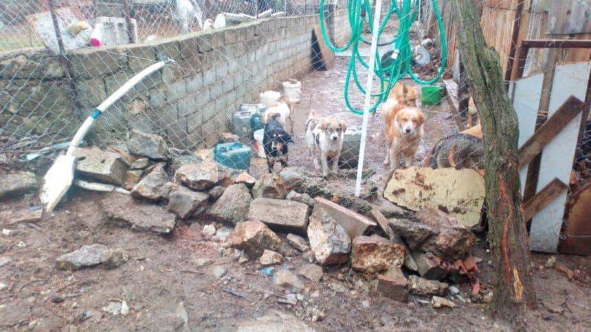 Βάρβαρες συμπεριφορές Δήμου Σιάτιστας και πολιτών κατά αδέσποτων ζώων στη Σιάτιστα. Κόλαση και το παράνομο δημοτικό κυνοκομείο Σιάτιστας