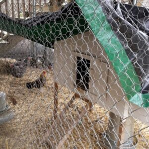 Λύκος στο μαντρί: Τι ισχύει στη νομοθεσία, ποιες οι υποχρεώσεις των μικρο-πτηνοκτηνοτρόφων και ποιος έχει την ευθύνη σε περιστατικά επιθέσεων αδέσποτων ή άλλων ζώων σε ποίμνια, κοτέτσια κλπ