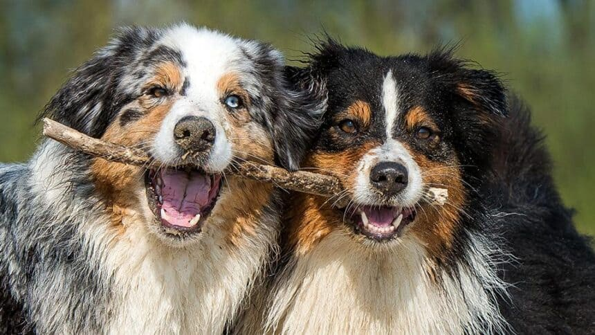 Aπόψεις επιστήμονα ευζωίας για την έννοια της ευζωίας των ζώων, που επιθυμεί την ανωνυμία του δημόσια