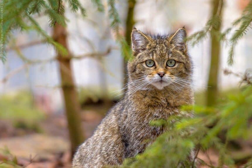 Βιοποικιλότητα: υποχρεωτική προστασία άγριας ζωής και ανθρώπων ζητά το ΕΚ
