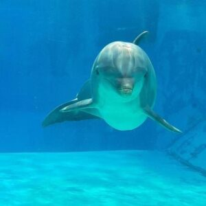 Rest In Peace Veera Η Ιστορία του διάσημου δελφινιού.