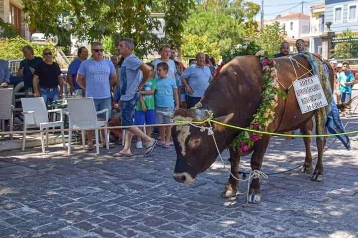 Ανακοίνωση της Π.Φ.Π.Ο. για την περιφορά του ταύρου στη Μυτιλήνη