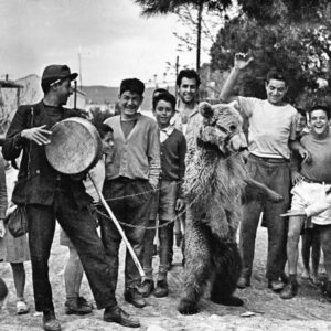 """Όπως παλιά, με τις αλυσοδεμένες αρκούδες! Απάντηση-γνωμοδότηση του καθηγητή της Κτηνιατρικής Σχολής Αριστοτελείου Πανεπιστήμιου  Θεσσαλονίκης Γεώργιου Αρσένου για τη βαρβαρότητα του """"εθίμου"""" του Ταύρου στη Μυτιλήνη."""