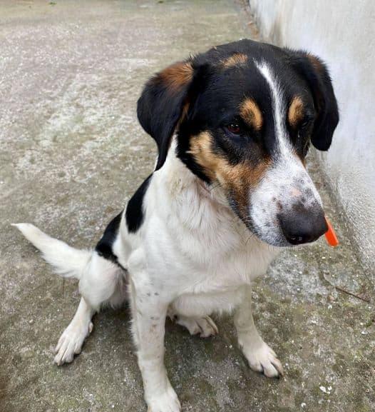 Αίτημα της ΠΦΠΟ για την επιβολή των νόμιμων κυρώσεων στον πυροσβέστη Κ.Π. για κακοποίηση αδέσποτου σκύλου