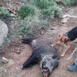 Που βρίσκονται τα ζώα που καθώς όλα δείχνουν απομάκρυνε ο παράνομος εκτροφέας από τη Λιβαδειά ?  Γιατί ο Δήμος δεν έχει προβεί ακόμη σε καμιά ενέργεια;