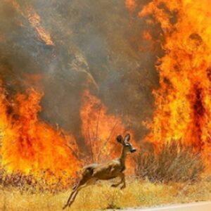 Δελτίο Τύπου: Μήνυση για τα χιλιάδες καμένα ζώα καταθέτει ΠΦΠΟ! Καλούνται όλοι οι φιλοζωικοί και περιβαλλοντικοί φορείς να συμμετέχουν! Press Release: A lawsuit for the thousands of burned animals is filed by PFPO! All animal welfare and environmental organizations are invited to participate!