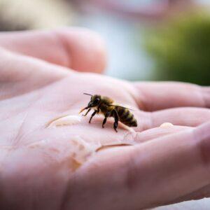 Πως Μπορούμε να Βοηθήσουμε τις Μέλισσες σε Κοντινές Περιοχές Πυρκαγιών.