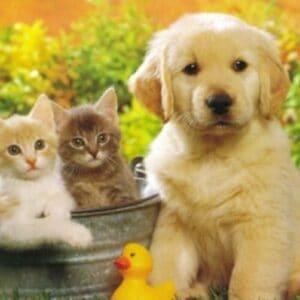 Δελτίο Τύπου: Κατατέθηκε χθες στη Βουλή το πολύπαθο νομοσχέδιο για τα ζώα συντροφιάς, τροποποιημένο μετά την διαβούλευση που προηγήθηκε.