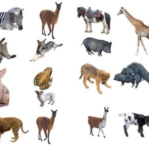 Παγκόσμια Ημέρα των Ζώων: Αρκεί μια μέρα να μας θυμίζει τις ηθικές υποχρεώσεις απέναντί τους;